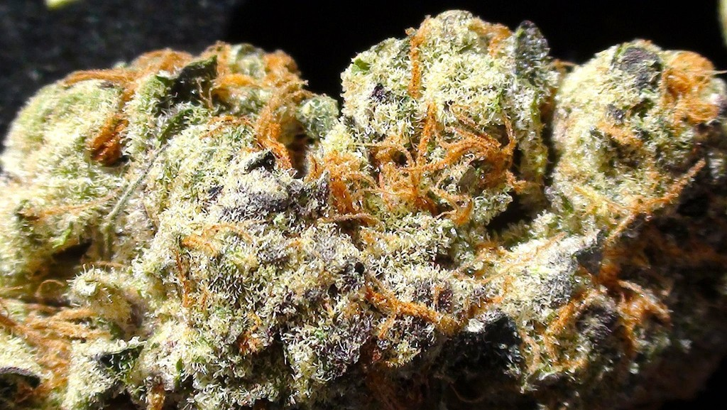 the most popular cannabis strains in california right now