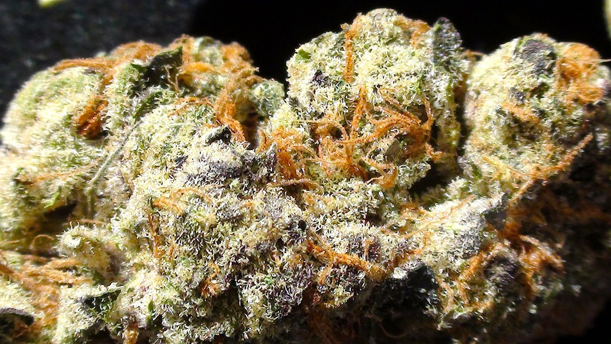 blog   these are the most popular cannabis strains in