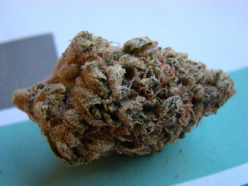Cannabis crossbreeding: Guava Chem.