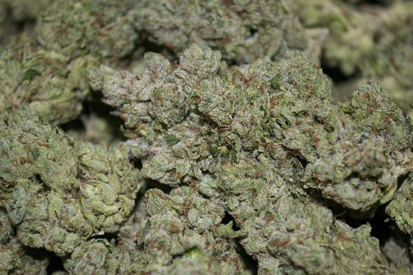 Most Popular Cannabis Strains in California: Overlord OG.