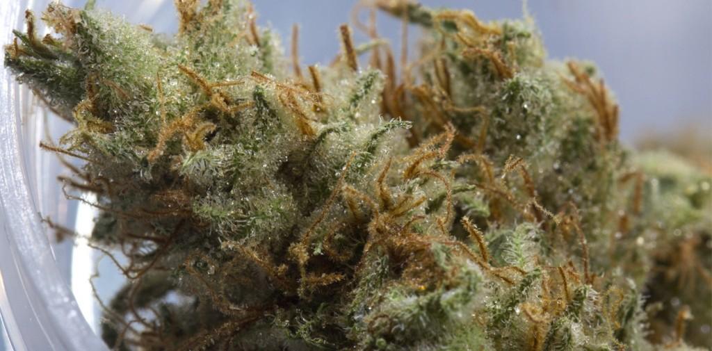Cannabis crossbreeding: Strawberry Banana