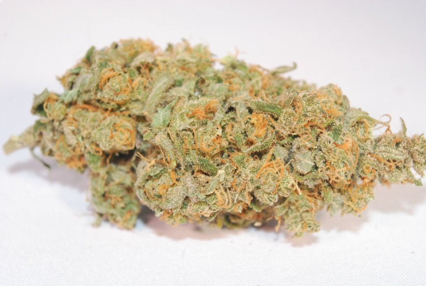 Most Popular Cannabis Strains in California: Super Lemon Haze