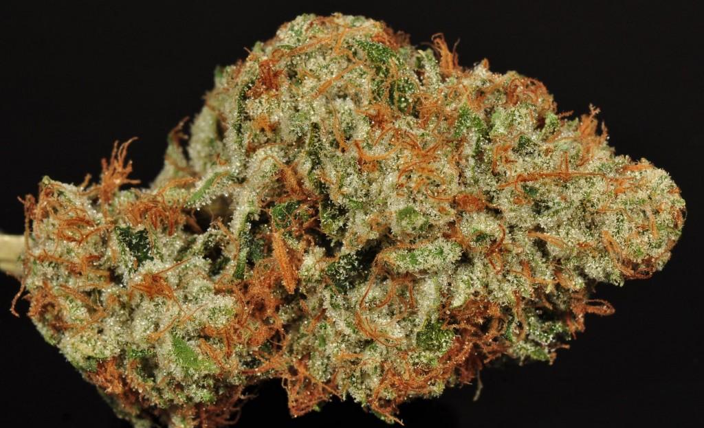Cannabis crossbreeding: White Fire OG