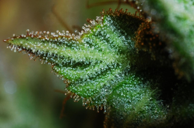 Cannabinoid Receptor 1 Structure