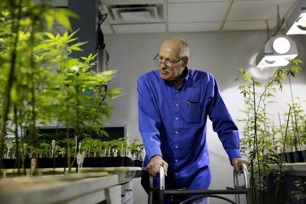 Senior viewing cannabis plants