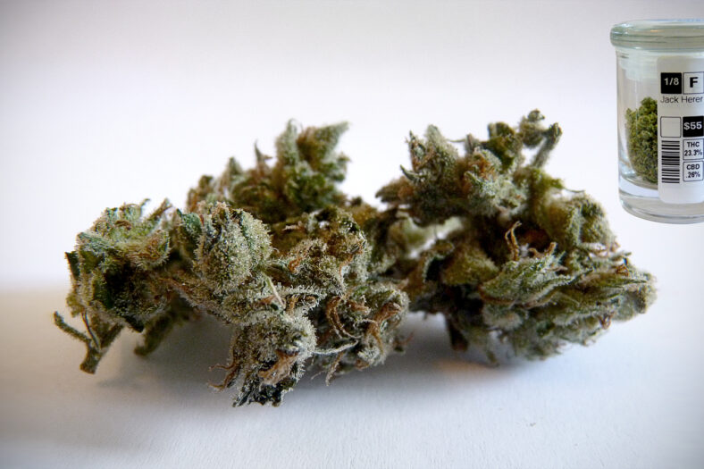 Most Popular Cannabis Strains in California: Jack Herer