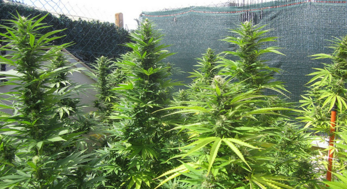 best place to grow weed