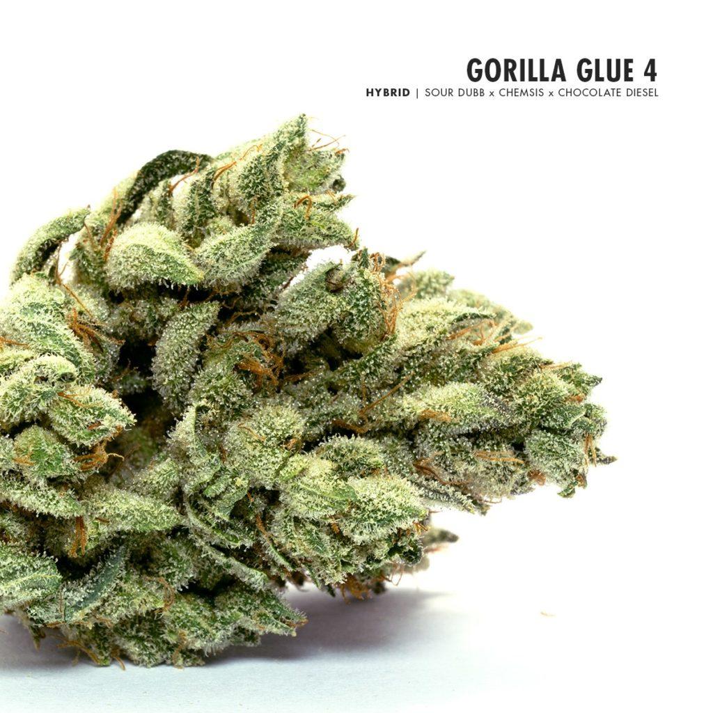 Gorilla Glue #4 cannabis review