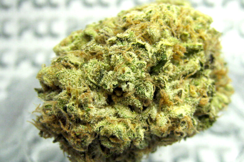 Best Weed for Daytime Use | Purple Trainwreck