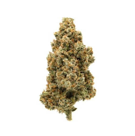 cannabis presents