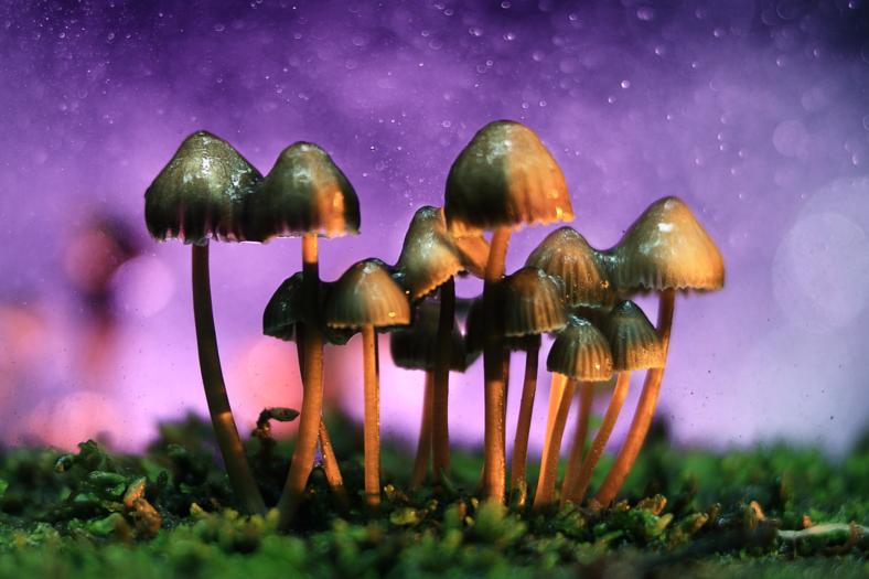 legalize magic mushrooms