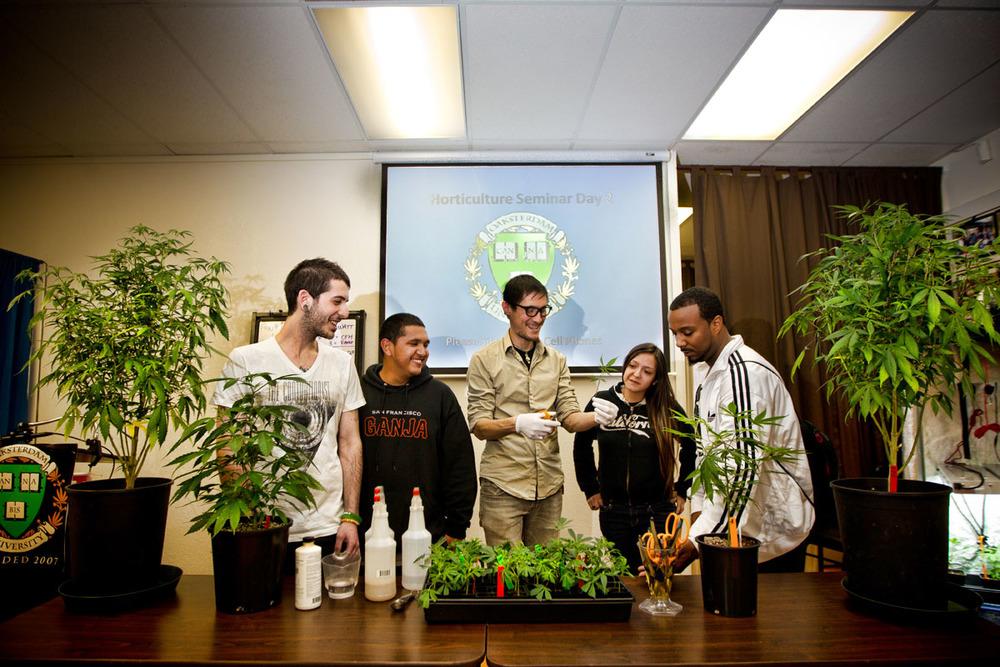 marijuana degree