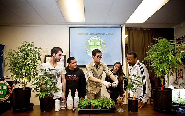 benefits of marijuana legalization